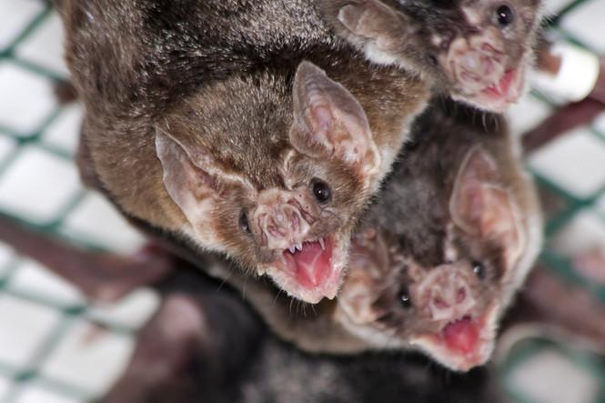 Bats: Friends or Foes