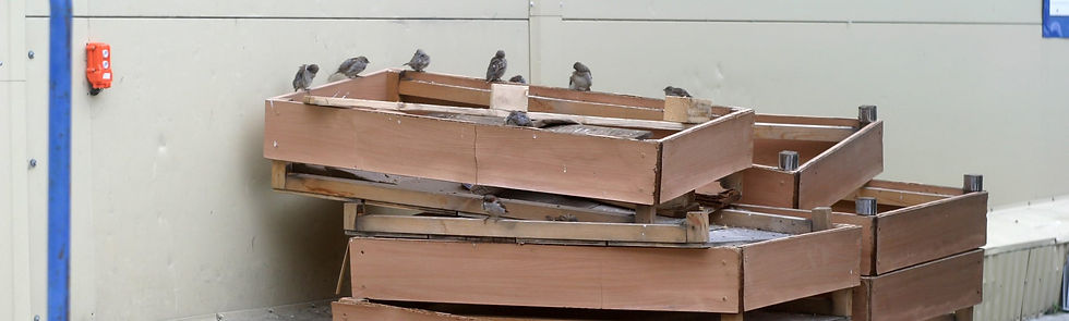 aviaway bird audit.jpg