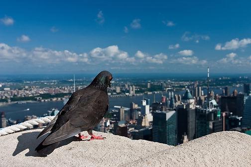 aviaway bird control services.jpg