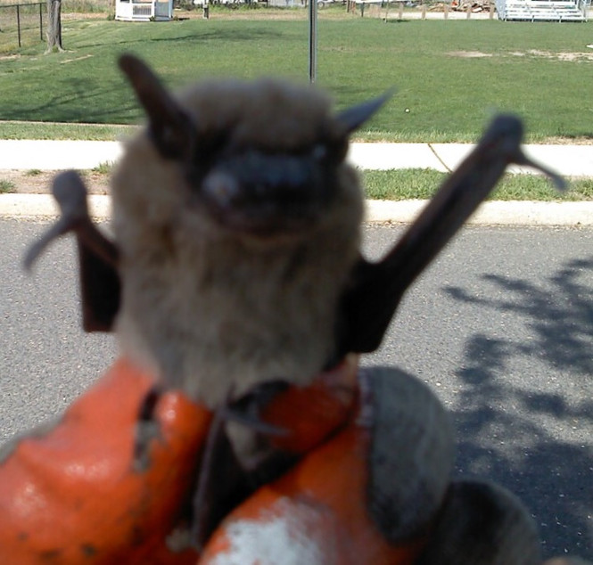 Signs That You May Have a Bat Problem