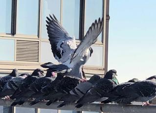 Bird Spikes for Bird Control