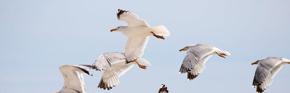 aviaway seagull.jpg