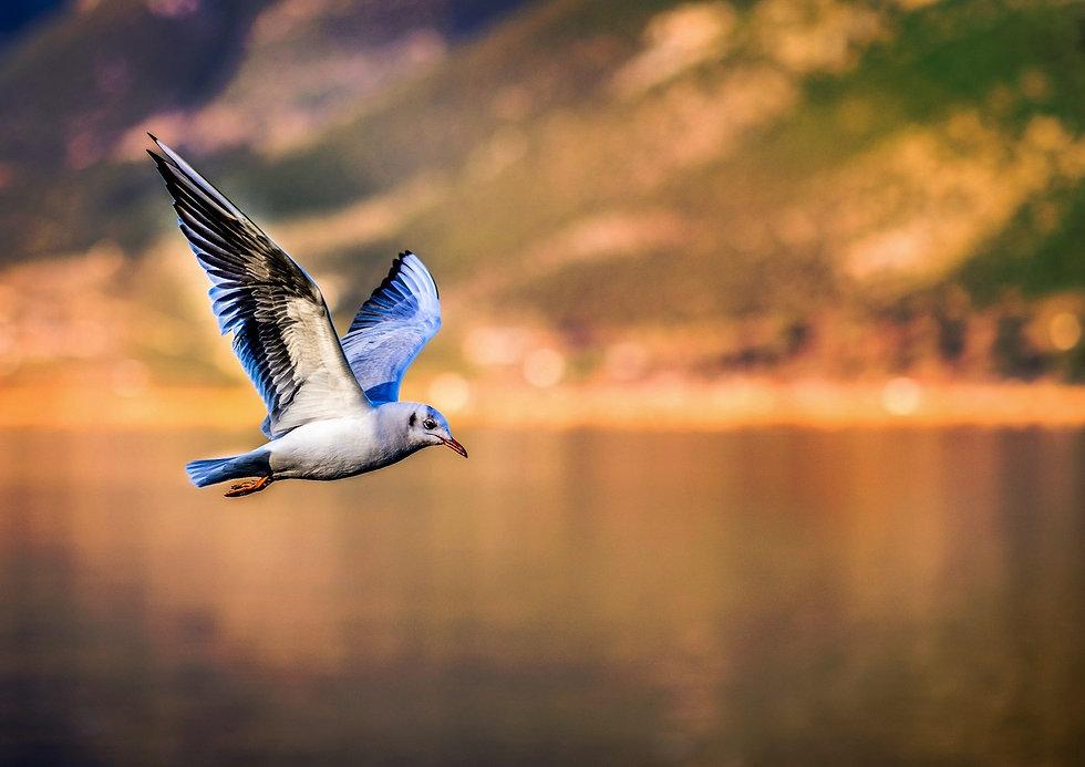 bird-3158784_edited_edited.jpg