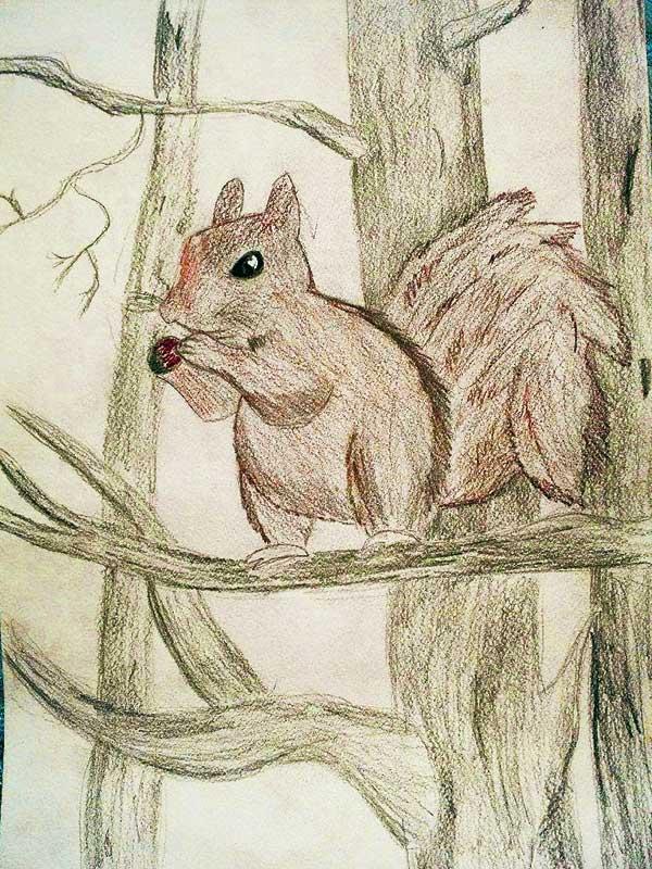 Orava.jpg