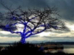 Clari Davis Tree City of Edmonds Pic.jpg