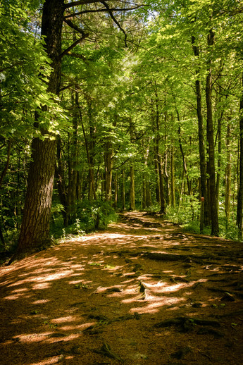 Boulevard of Pines
