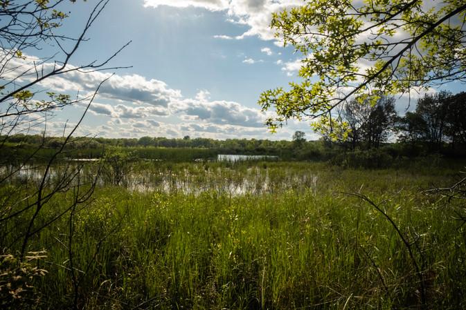 """""""Living"""" River Grassland"""