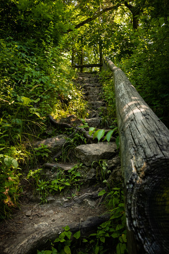Steps of Nature