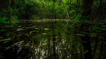 Backyard Swamps