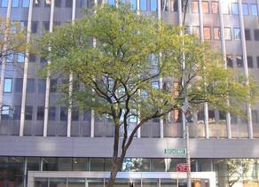 #407 New York City Immigration Court