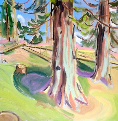Argyll Trees