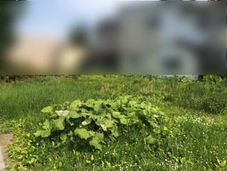 空き地の草刈作業