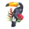 HORNBILL OF TOGIAN ISLANDS