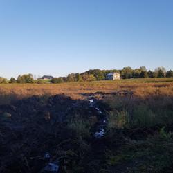 Wetland control