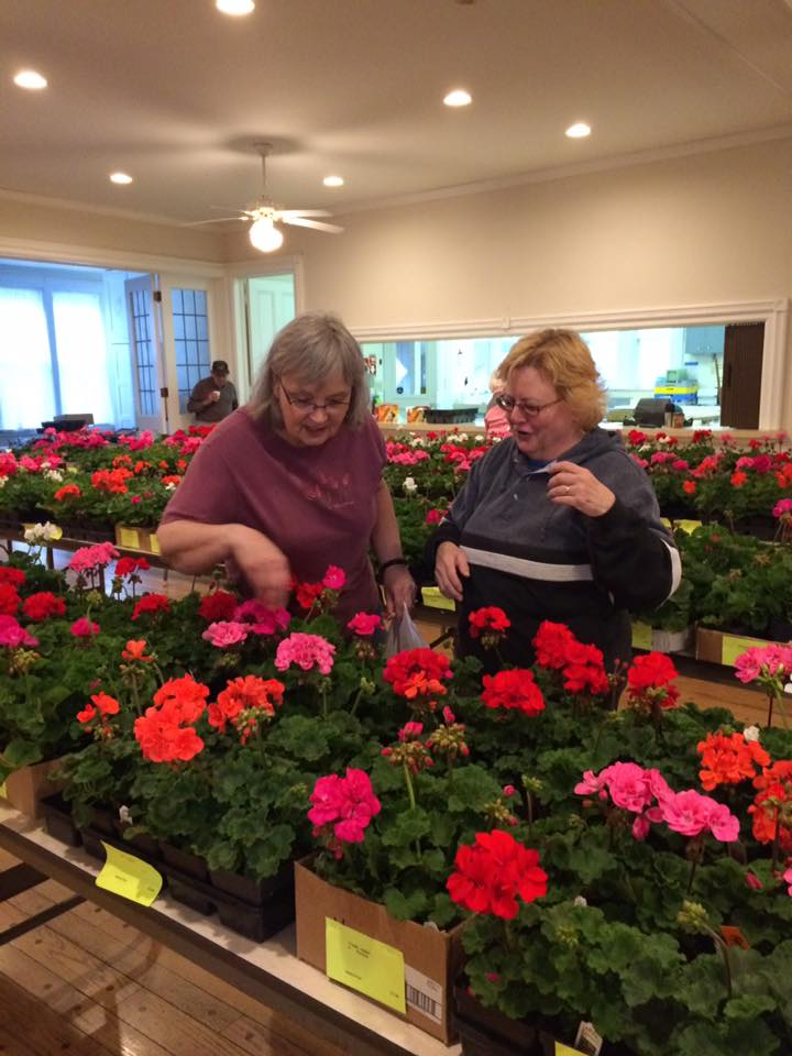 Jill and Chris _ Geranium Sale