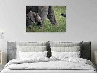 turtle-painting-on-canvas-bedroom.jpg