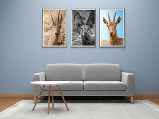 d-rendered-of-interior-of-modern-living-room-three-empty-photo-frame-mockup-design-product
