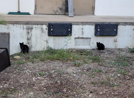 Campus Cats