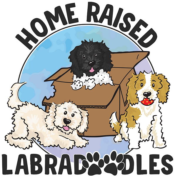 home raised labradoodles NEW.png