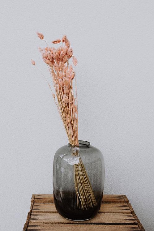 Phalaris rosé