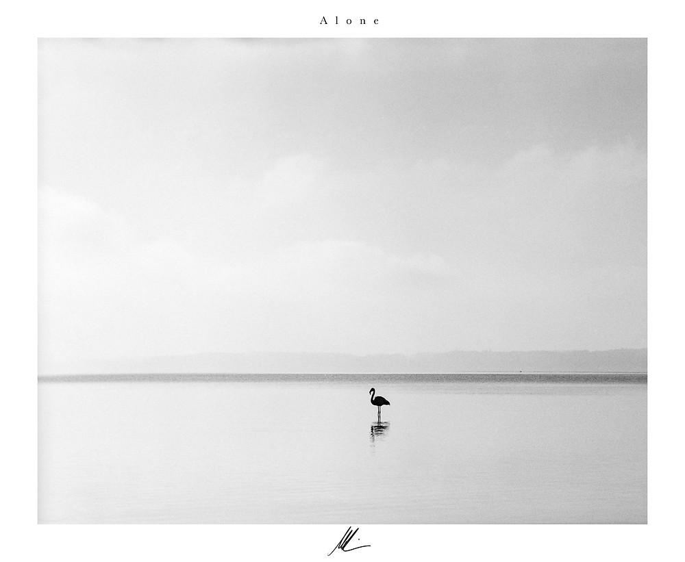 Flamingo am Chiemsee als Fine Art Photography, Schwarz-Weiß Fotografie, analog Fotografie