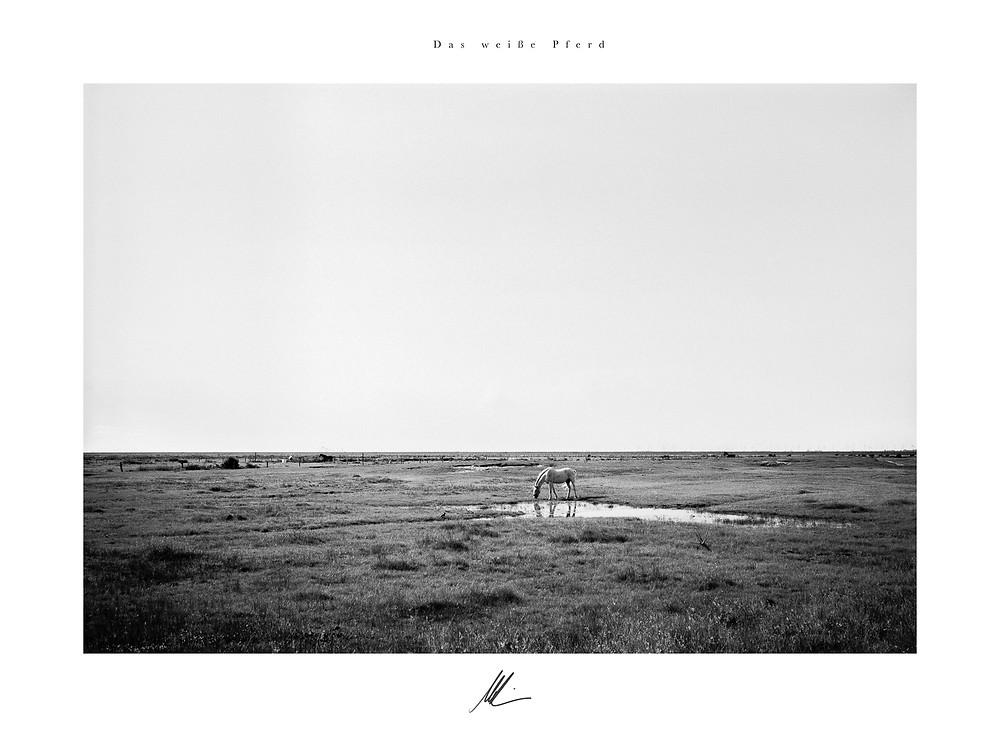 Titel: Das weiße Pferd, Fuji GW690, Rollei RPX 100 at 800 ASA, analoge Fotografie, Merten Riesner, Fine Art Photography, Norderney
