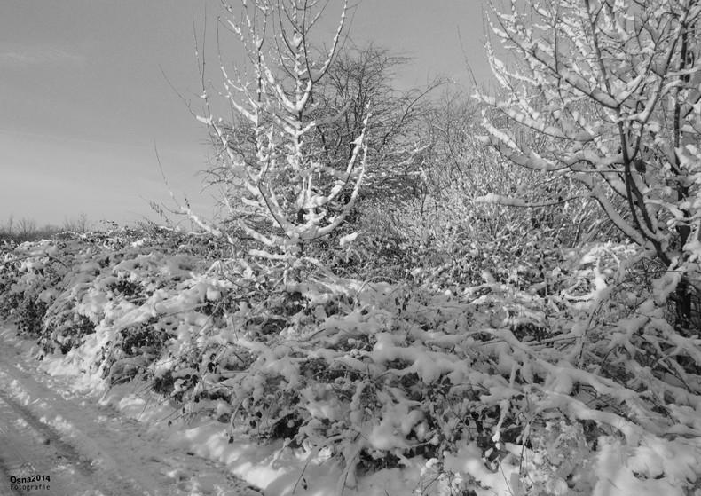 Schnee im Winter - seltenes Phänomen