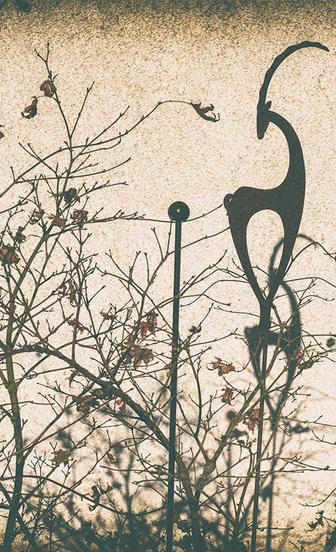 Schatten-Blumen