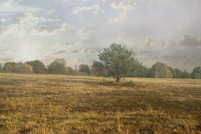 Heidelandschaft im Nebel