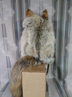 Kenai Coyote