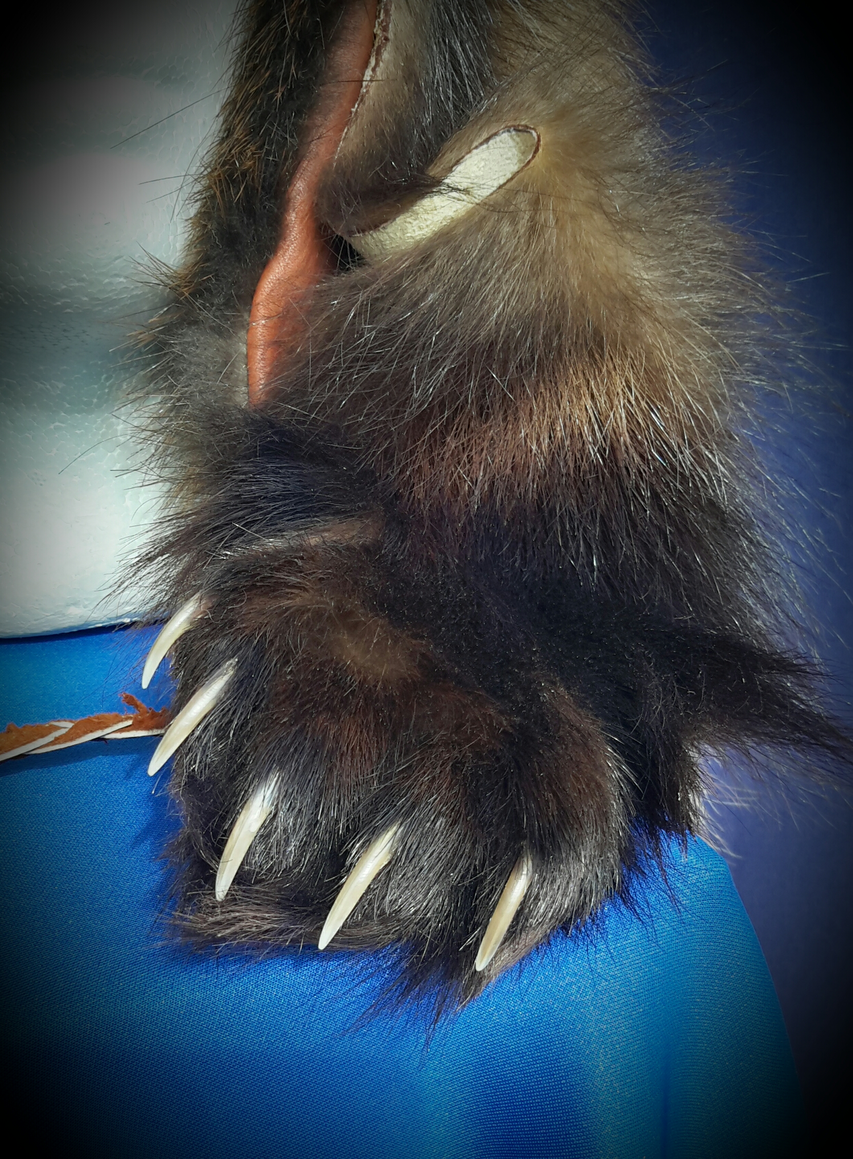 Front paw with sharp claws