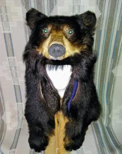 Black Bear w/ reflective eyes