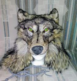 WolfBear Head