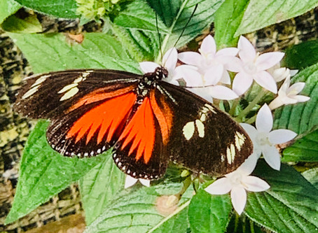 Butterfly Conservatory: A Rainforest regeneration project