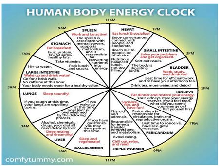 Human Energy Clock
