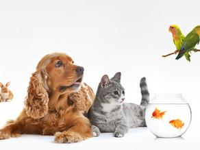 ¿Cuáles son los alimentos perjudiciales para mi mascota?