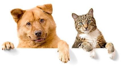 Cat and Dog License Osceola Nebraska