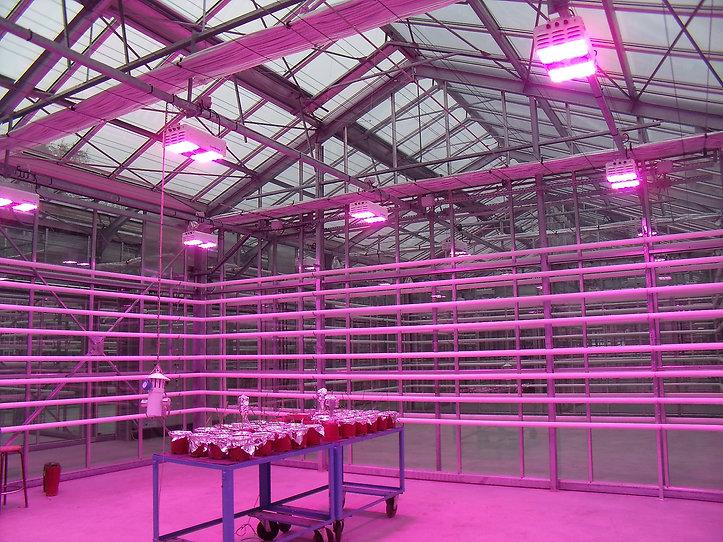 Système d'éclairage LED au sein d'une serre de recherche réalisée par CMF pour l'université catholique de Louvain (Belgique)