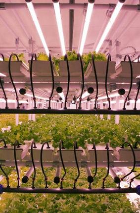 Système d'éclairage LED pour optimiser la culture de plante et végétaux