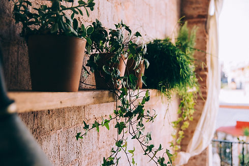 curly-tendrils-of-potted-plants-on-woode