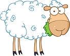 sheep cartoon.jpg