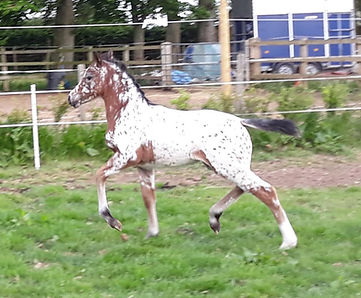Trinityhouse Talula 27th May 1 month old