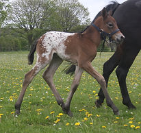 Brunette and filly May 21 2021.jpg