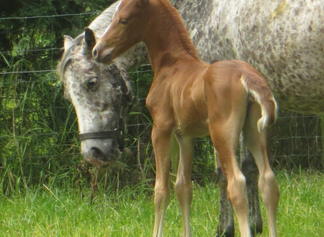 Lilly's foal is here!