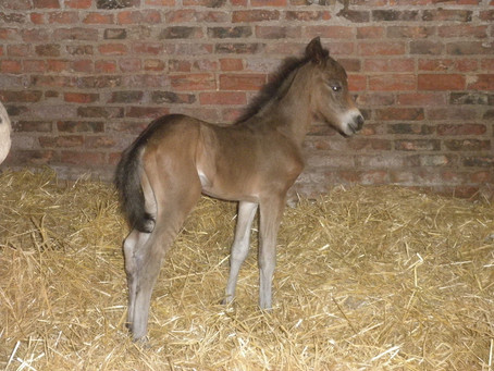 Passion foals early!