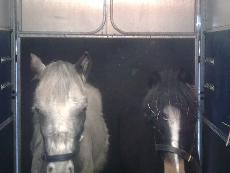 Oscar and Layla leave for Derbyshire!