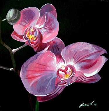 Orchids circa 2006