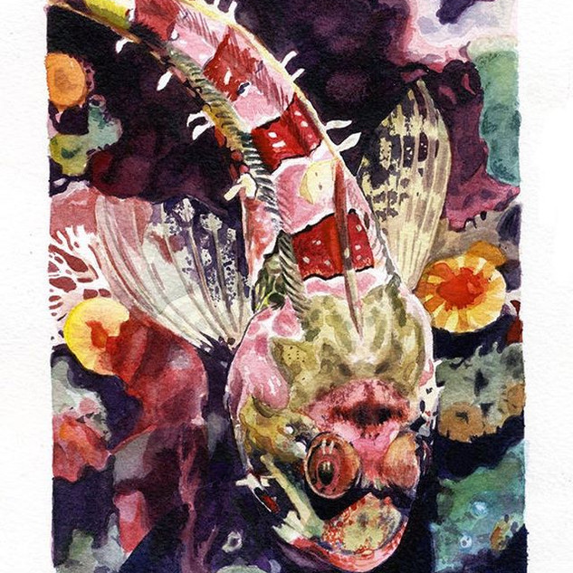 #fish #watercolor #comissionart #design