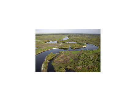 Army Corps of Engineers & the Florida Everglades