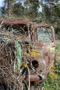 Due Jolly Vine Covered Car